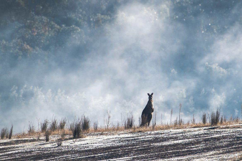Animaux Australie : Voici les animaux australiens uniques